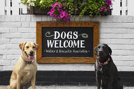 Rover Dog Friendly Pub Awards 2019